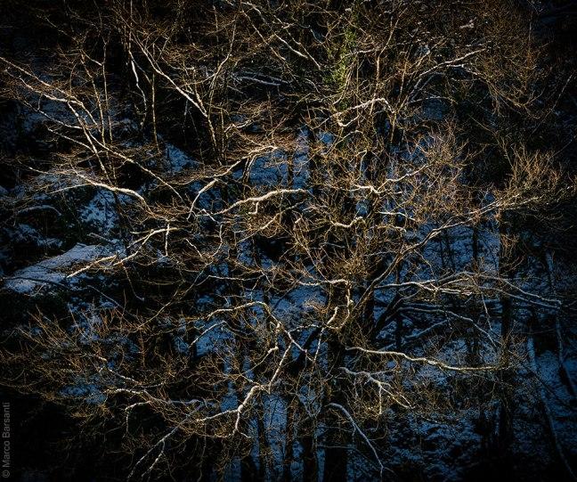 Alberi, Turrite di Gallicano, dic. 2012 - © Marco Barsanti