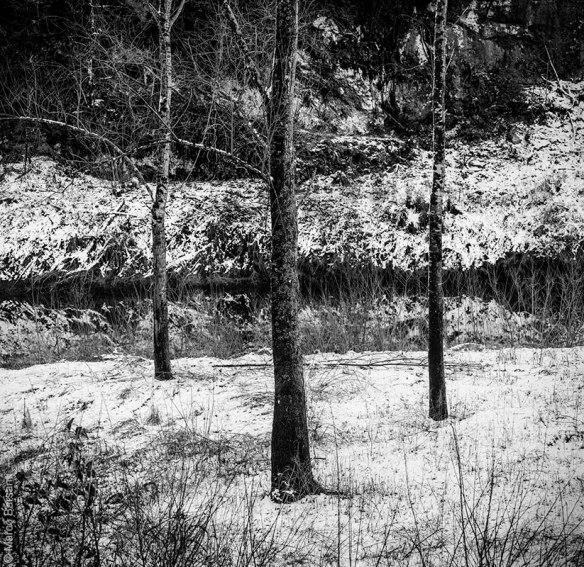 Tre alberi, Turrite di Gallicano, dicembre 2012 - © Marco Barsanti