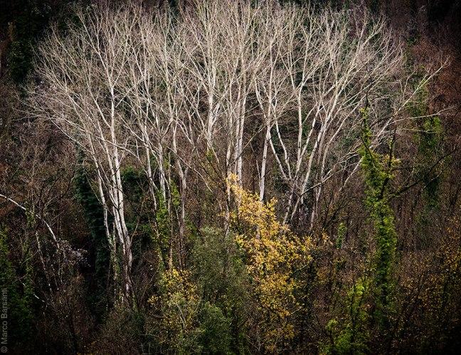 Ventaglio, Montefegatesi, dicembre 2012 - © Marco Barsanti
