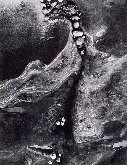 Minor White, Barnacles, 1964 - © images are copyright of their respective owners, assignees or others