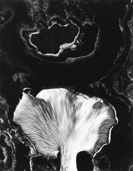 Paul Caponigro, Fungus, 1962 - ©Images are copyright of their respective owners, assignees or others