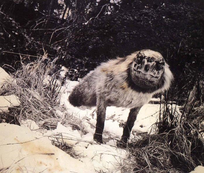 Joan Fontcuberta - Alopex Stultus, Dr. Ameisenhaufen's Fauna series, 1988 - © copyright Joan Fontcuberta