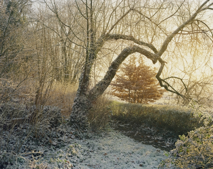 """Louis Heilbromm - Tree Morning, 2003, from """"Flowers and More"""" - © Louis Heilbronn"""