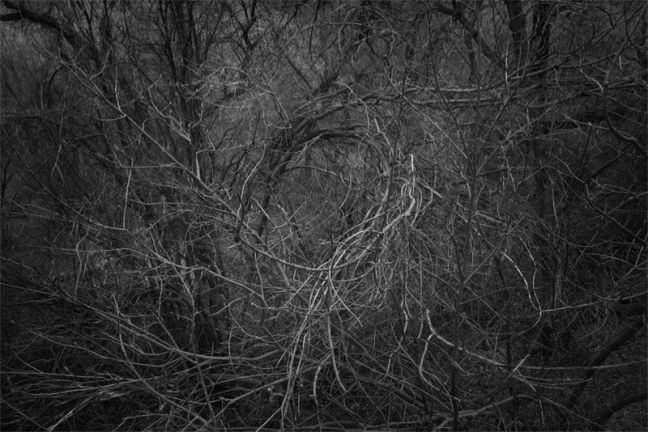 Andrew Beckham - A Vortex Of Brambles, from the series