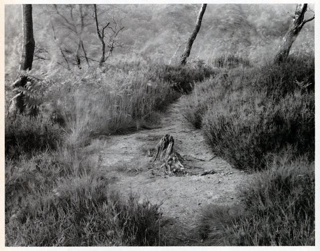 John Blakemore - Path, undated - © John Blakemore