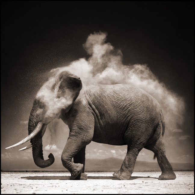 Nick Brandt, Elephant with Exploding Dust - © Nick Brandt
