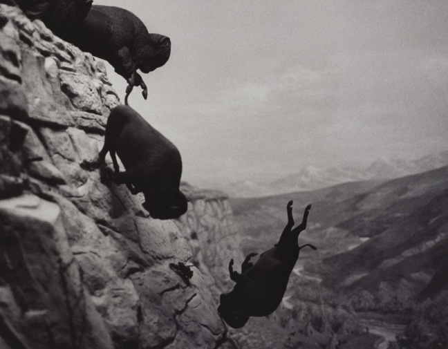 David Wojnarowicz, Untitled (Buffaloes), 1994 - ©  the estate of David Wojnarowicz