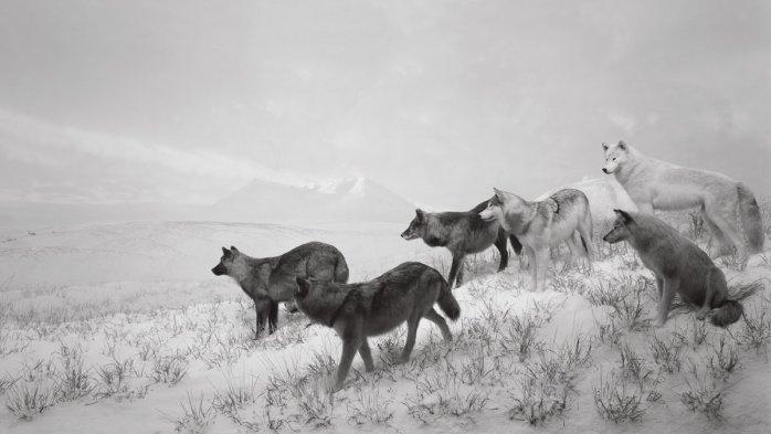 Hiroshi Sugimoto, Dioramas (Alaskan Wolves) - © Hiroshi Sugimoto
