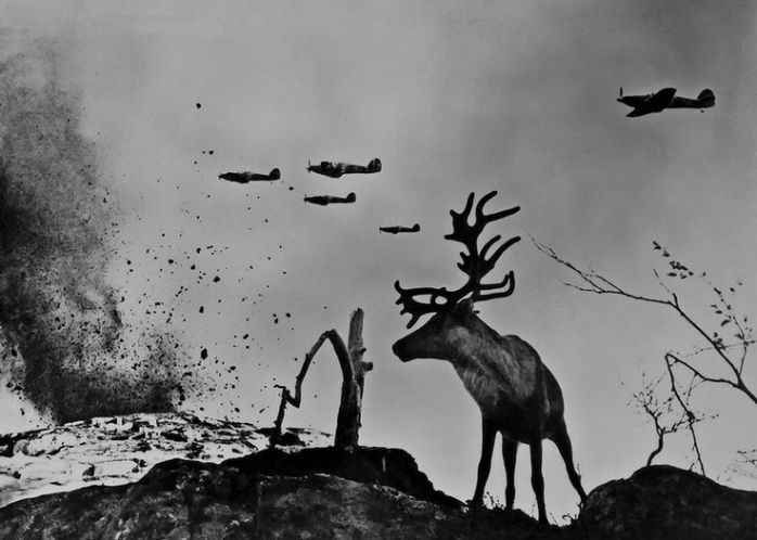 Yevgeny Khaldei, Reindeer Yasha at War, Murmansk area, 1941 - © Image is copyright of the respective owners, assignees or others