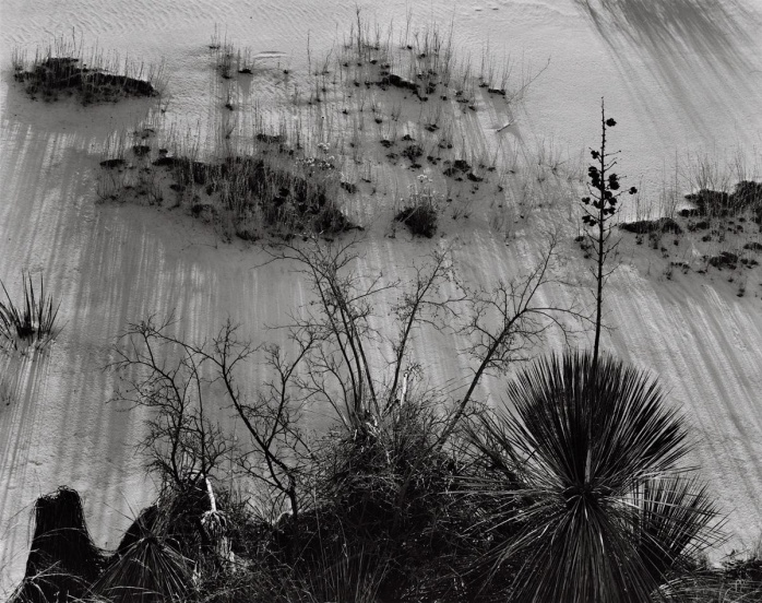 """Brett Weston, Yucca and Scrub, White Sands, New Mexico, from the """"White Sands"""" portfolio -©Image copyright of the respective owners, assignees or others"""