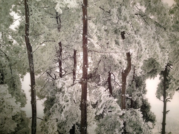 Chen Jiagang, The Cold Forest, 2011 - © Chen Jiagang