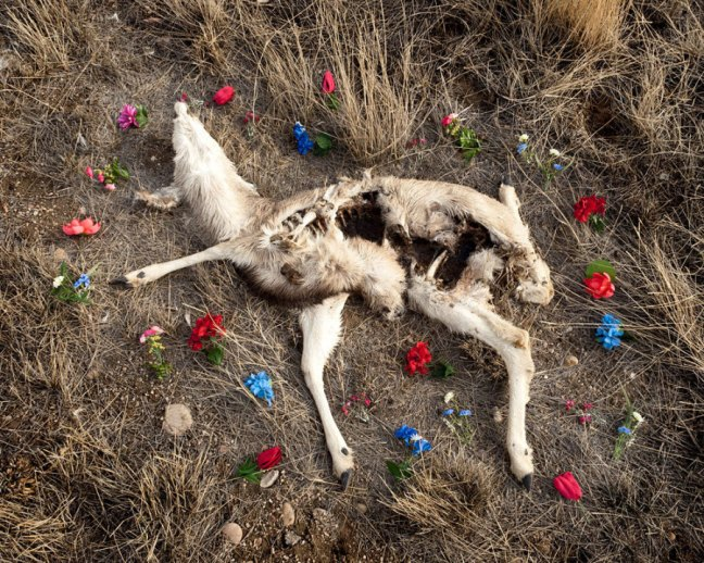 Emma Kisiel, Deer 1, from the series At Rest, 2011 - © Emma Kisiel