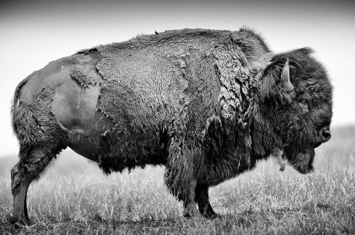 """Heidi e Hans-Jurgen Koch, from the series """"Buffalo ballad"""" - © Heidi e Hans-Jurgen Koch"""