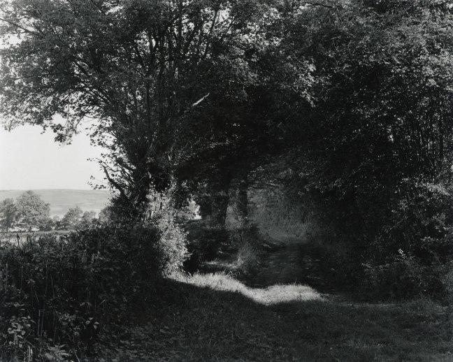 wayne-gudmundson